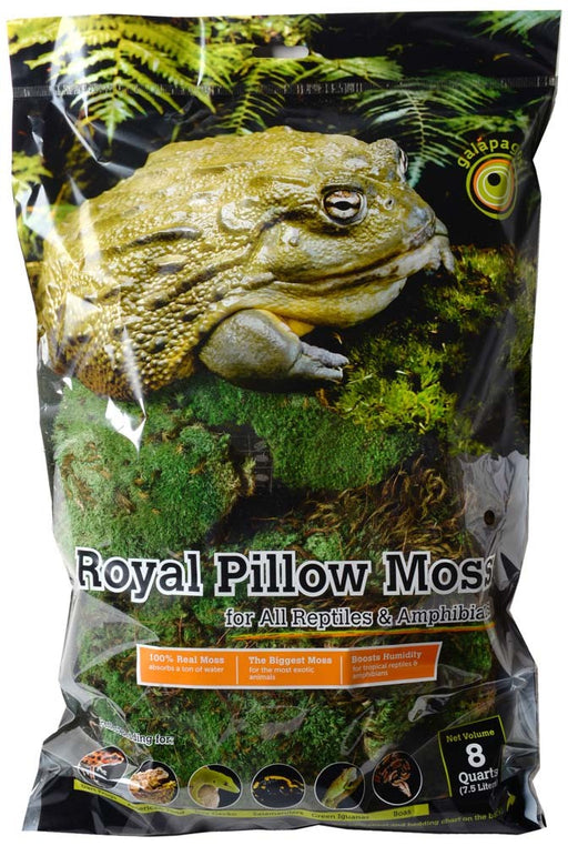 Galapagos Royal Pillow Moss Fresh Green Bag 8qt