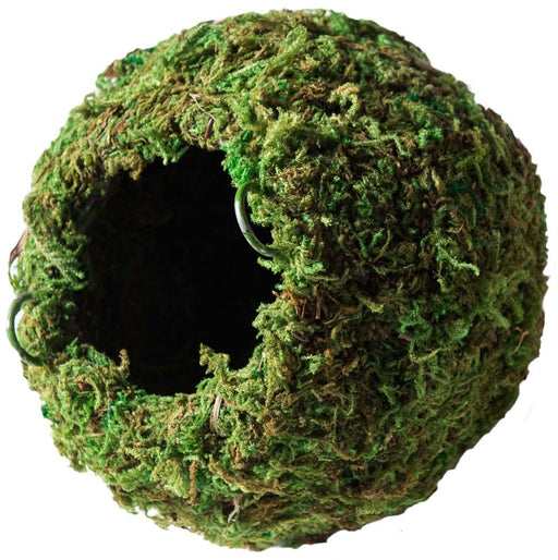 Galapagos Mossy Caves Green 4in Diameter