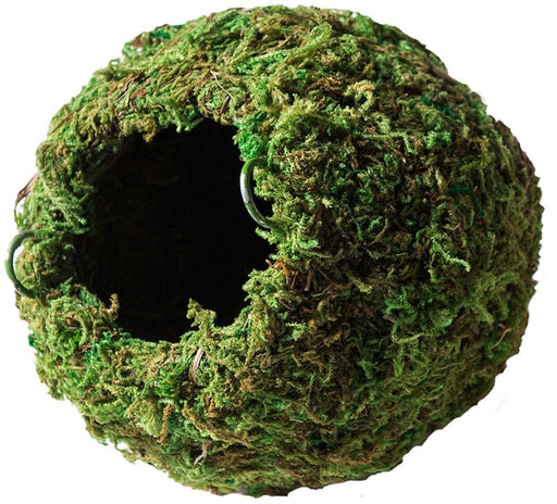 Galapagos Mossy Caves Green 6in Diameter