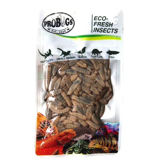 ProBugs Black Soldier Fly Larvae