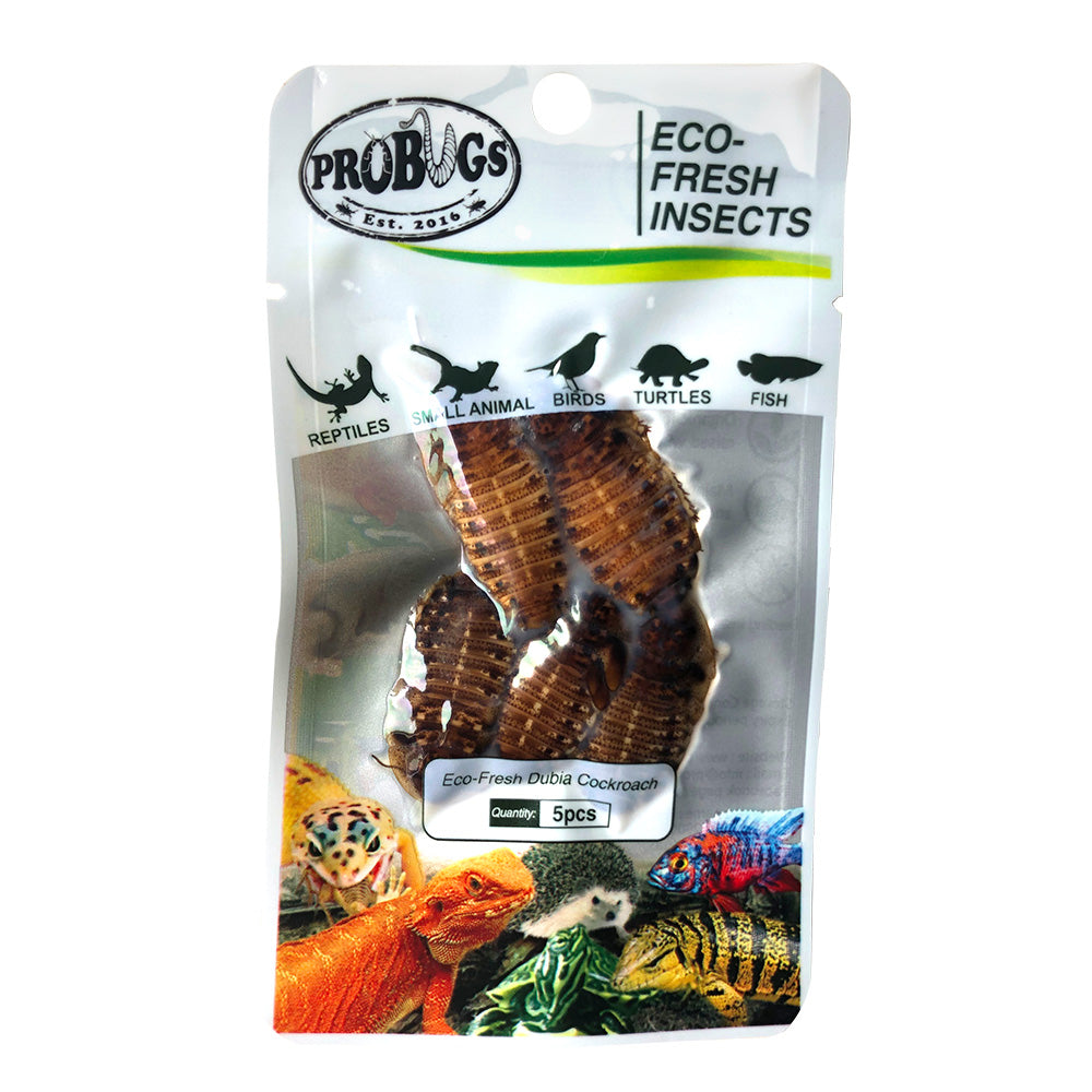 Pro Bugs Dubia Roaches