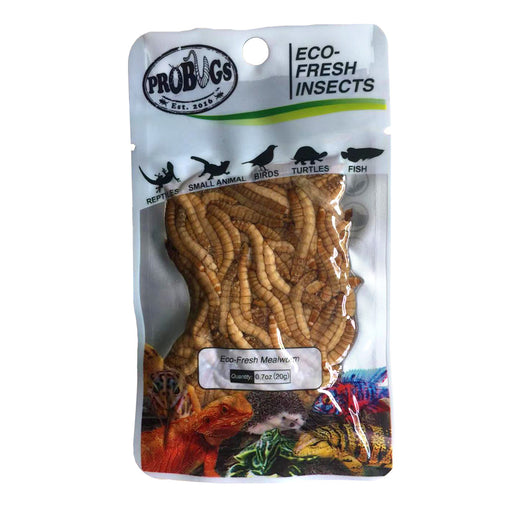 Pro Bugs Mealworms
