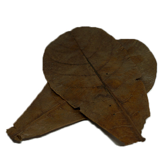 Large Almond Leaves