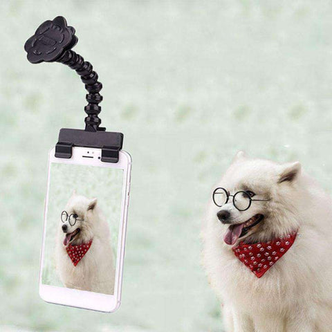 Best Pet Selfie Stick
