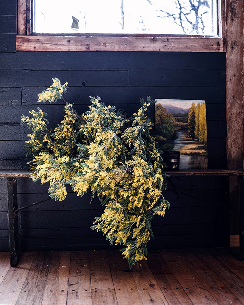 Six things you need to know about Wattle