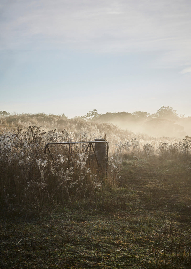 An image of a country gate in the morning mist in the Australian countryside