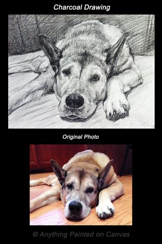 Charcoal drawing of a dog from photo