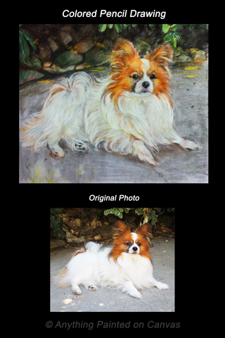 Realistic colored pencil drawing of a dog from photo