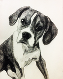 Black and white pencil drawing of a boxer puppy.