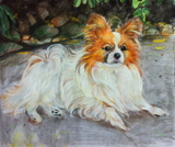 Colored pencil drawing of a Pomeranian dog.