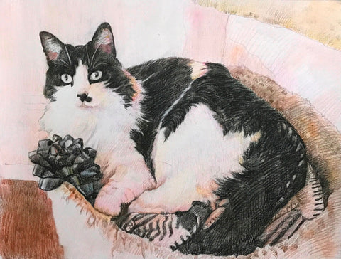 Colored pencil drawing of a black and white cat.