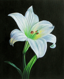 Oil painting of a lily.
