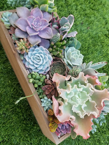 Succulent arrangement wood box (Local pick up only)