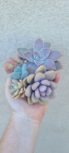 Pastel Perfection Cuttings Set