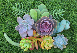 Rainbow cuttings set 1