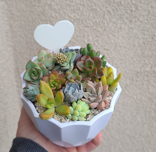 Lovely Little Succulents planter kit FEBRUARY