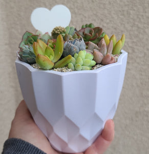 White geometric pot FEBRUARY