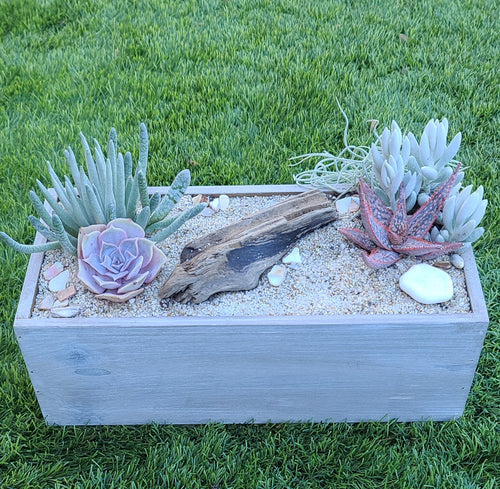 DIY beachy planter kit FEBRUARY