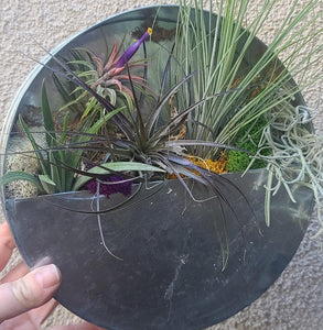 Tillandsia starter kit