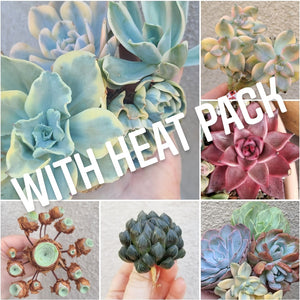 "Quarterly ""Rare"" Succulent Subscription Box WITH HEAT PACK"