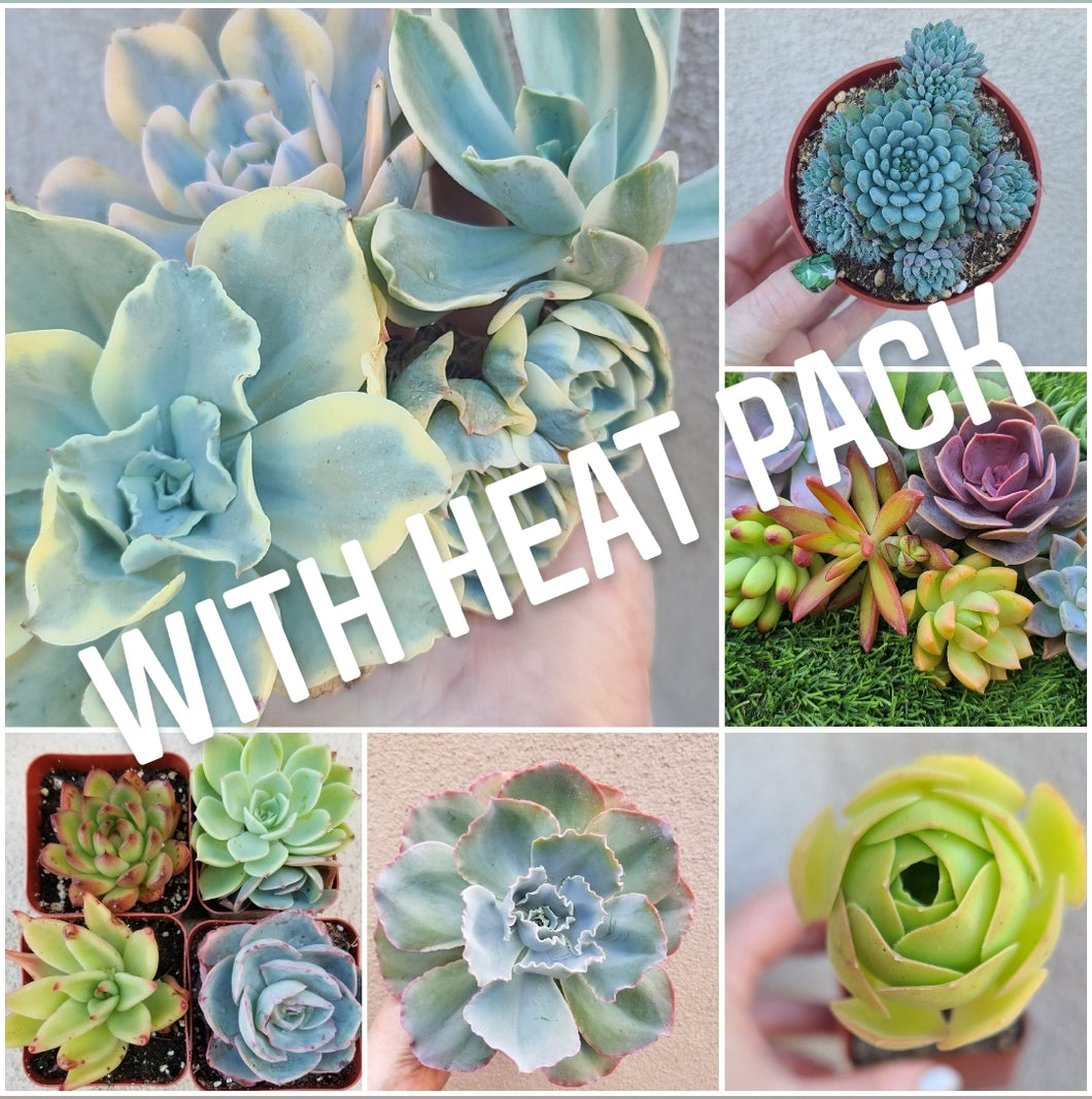 Monthly Succulent Subscription WITH HEAT PACK