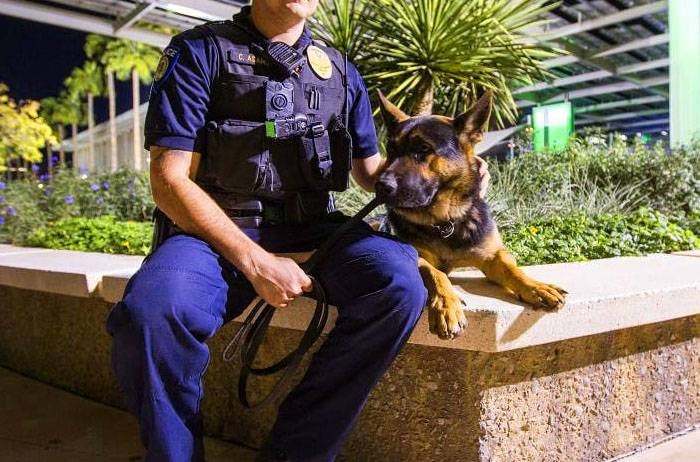 Types of Police Dogs - Patrol Dogs