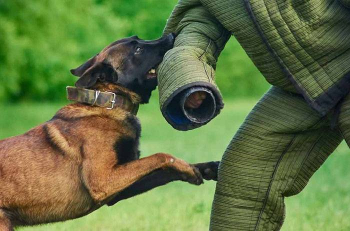 Types of Police Dogs - Apprehension or Attack Dogs