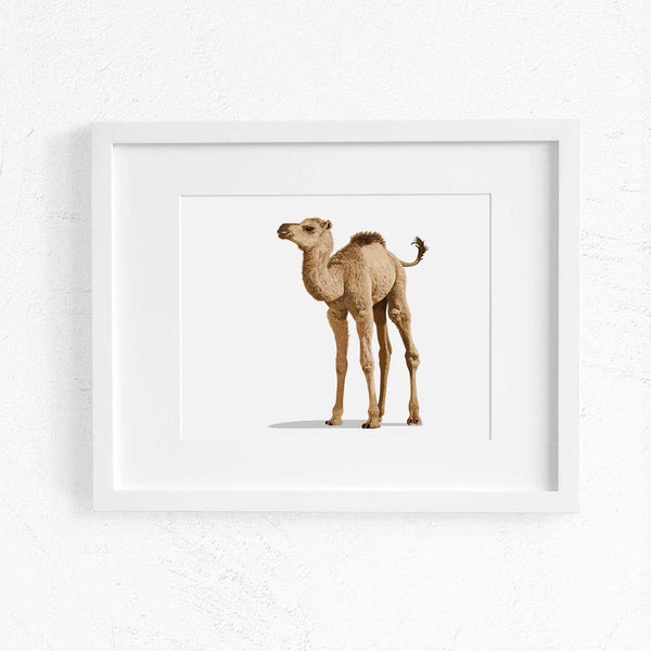 Landscape desert Baby Camel  - toddler nursery artwork from Paper Llamas