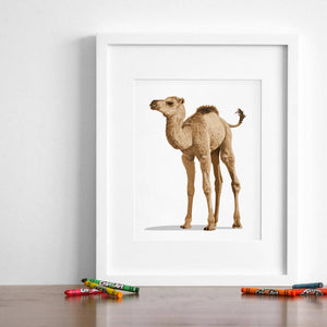 Baby Camel  - baby desert nursery artwork from Paper Llamas