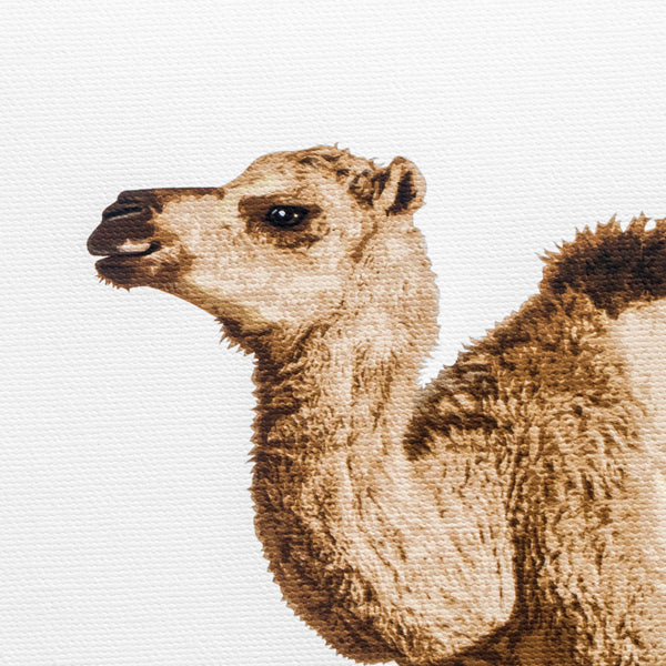 Baby Camel  - printed baby nursery artwork from Paper Llamas