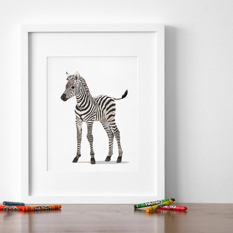 Baby Zebra  - baby nursery art from Paper Llamas