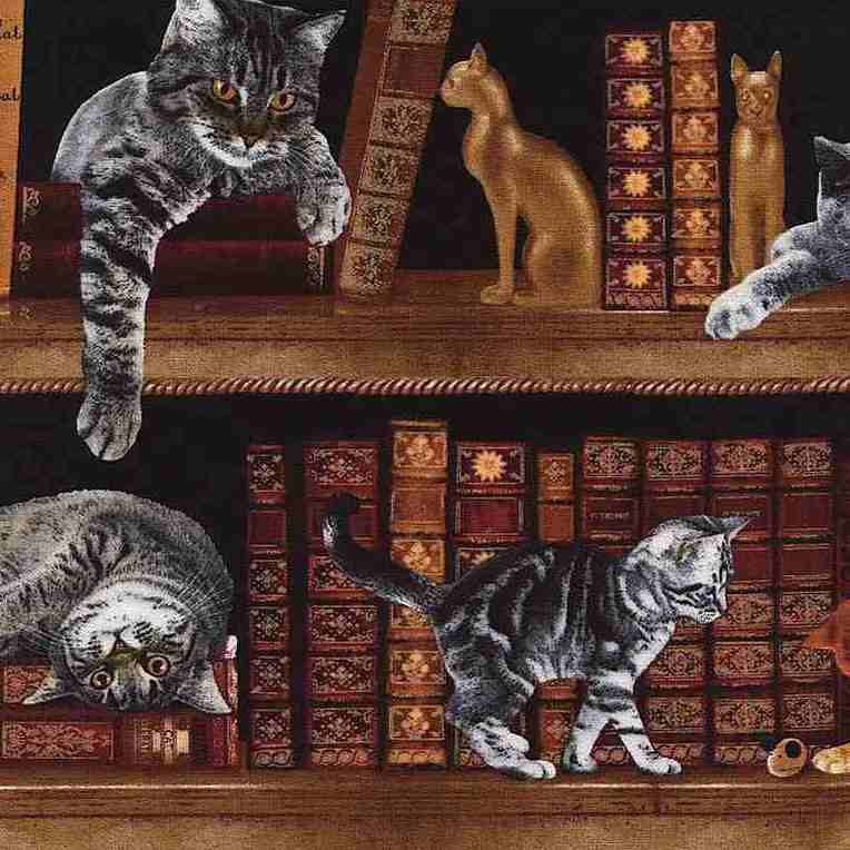 CRAZY FOR CATS Cats in Library