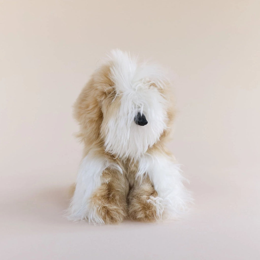 Toy Dog - Suri - Small