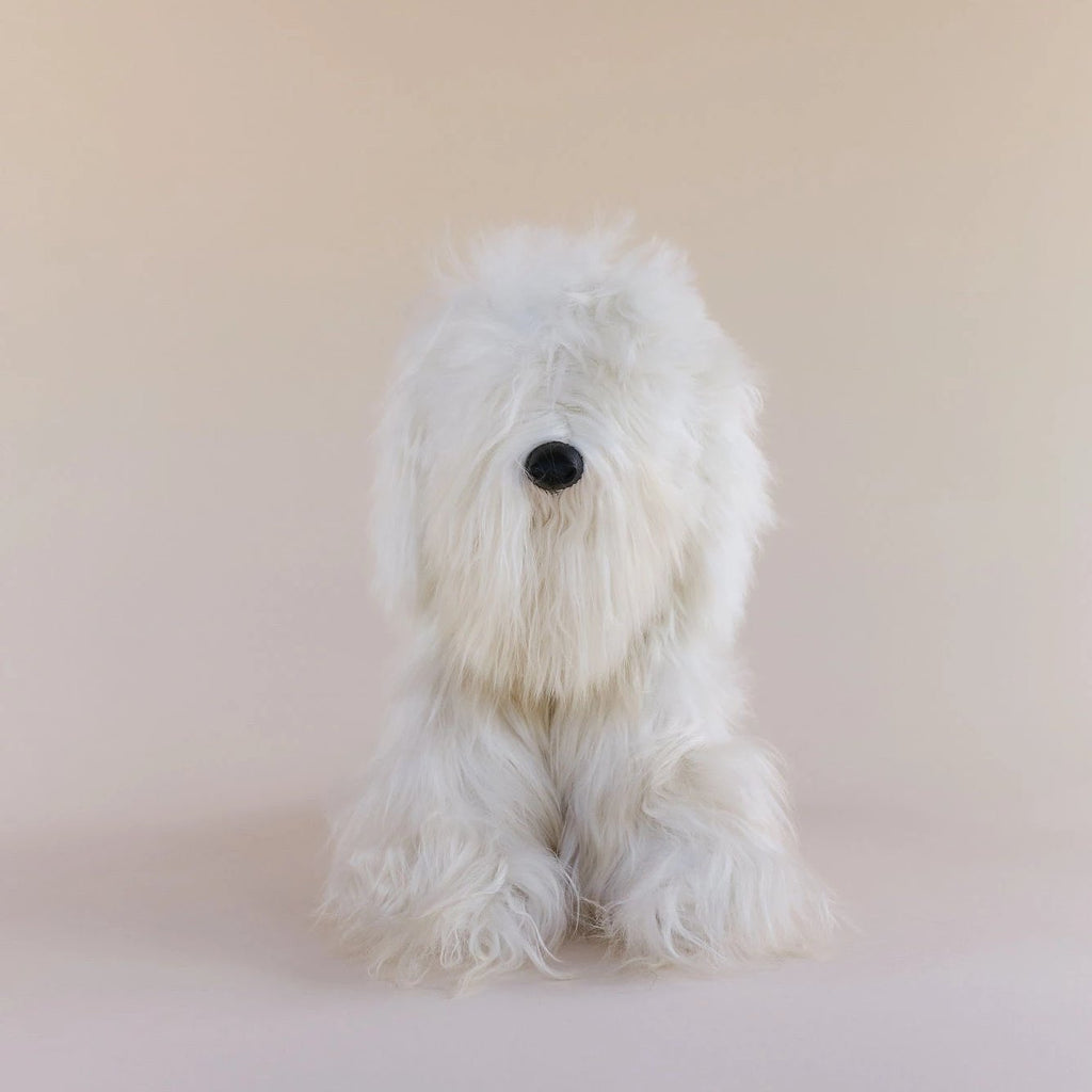 Toy Dog - Suri - Medium