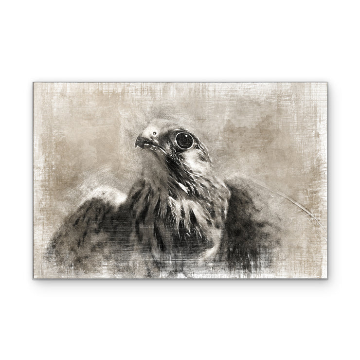 Vintage Hawk Art Print on Wood