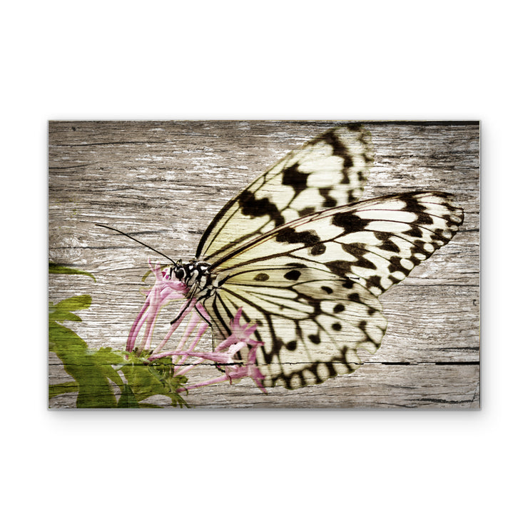 Butterfly Feeding in Woodgrain Art Print on Wood