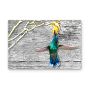 Hummingbird Feeding in Woodgrain Art Print on Wood