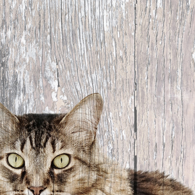 Kitty Peekaboo Photo Print on Wood
