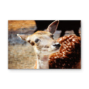 Fawn Photo Print on Wood