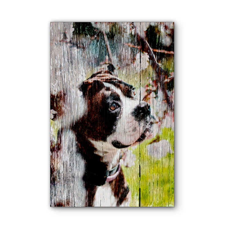 Cherry Blossom Boxer Photo Print on Wood
