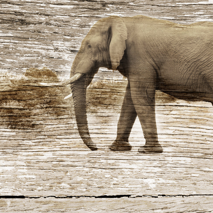 Vintage Elephant Art Print Fused on Cracked Woodgrain