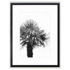 Palm Tree Black And White Photograph Matted Framed Art Print Comes In Multiple Sizes And Colors or Colored Frames