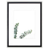 Photograph Eucalyptus Matted Framed Art Print Comes In Multiple Sizes And Colors or Colored Frames