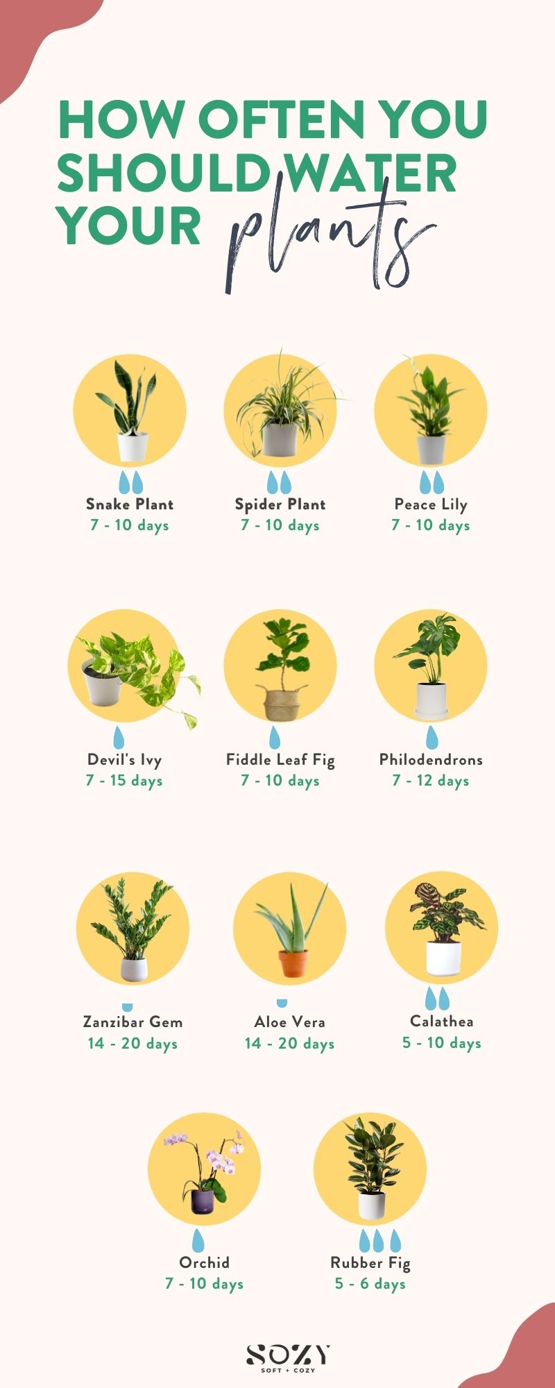 how often should you water your plants