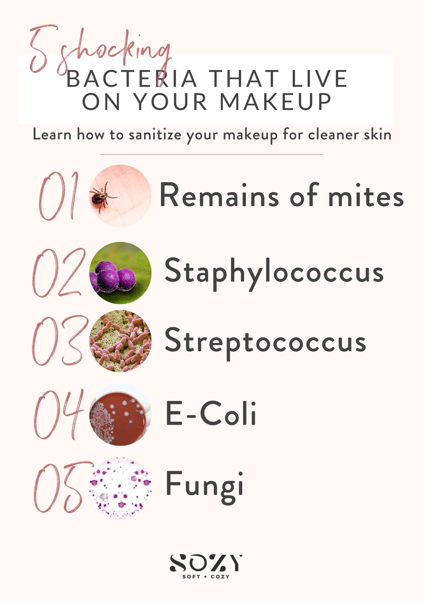 common bacteria found in makeup
