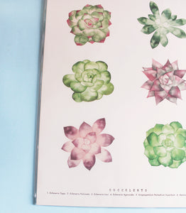 Living Pattern - Succulents Print