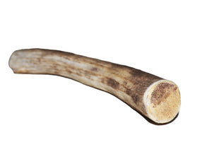 Deer Antler (medium) - PuppyGoGo Market