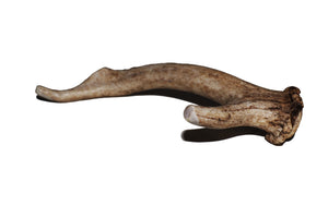 Deer Antler (large)