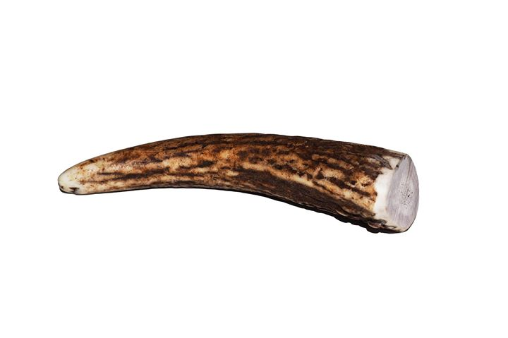 Deer Antler (x-small)