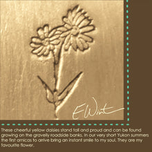 Meaning of arnica (northern daisy) symbol.